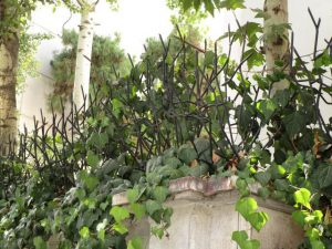 حفاظ شاخ گوزنی ارتفاع متوسط