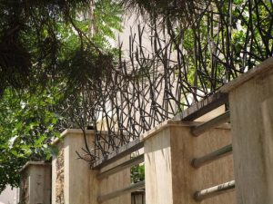 حفاظ شاخ گوزنی ارتفاع بلند