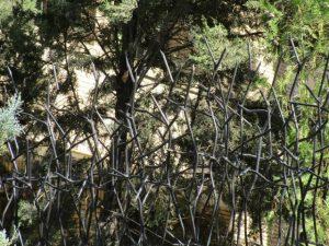 حفاظ شاخ گوزنی برای حیاط