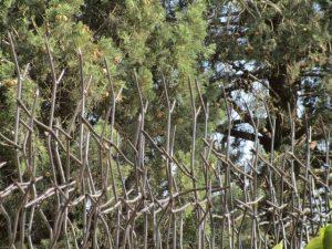 حفاظ شاخ گوزنی حفاظ لند