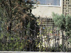 حفاظ شاخ گوزنی برای خانه