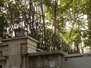 حفاظ شاخ گوزنی محوطه